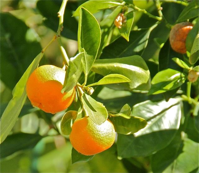 180523bbcut-fruit6