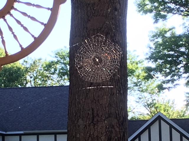 180606bbcut-spiderweb1