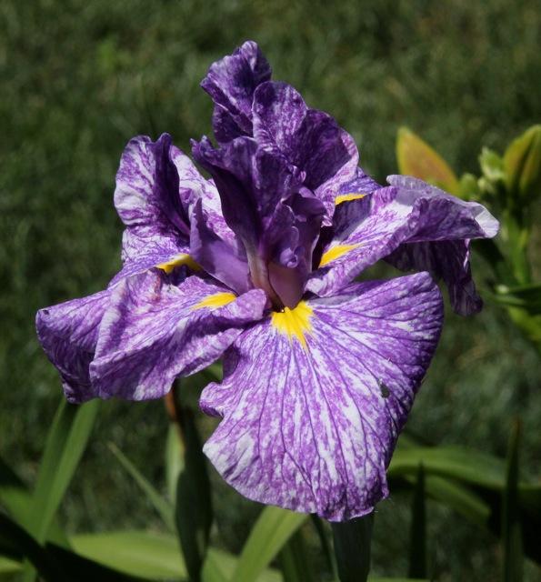 180709bbcut-lily1