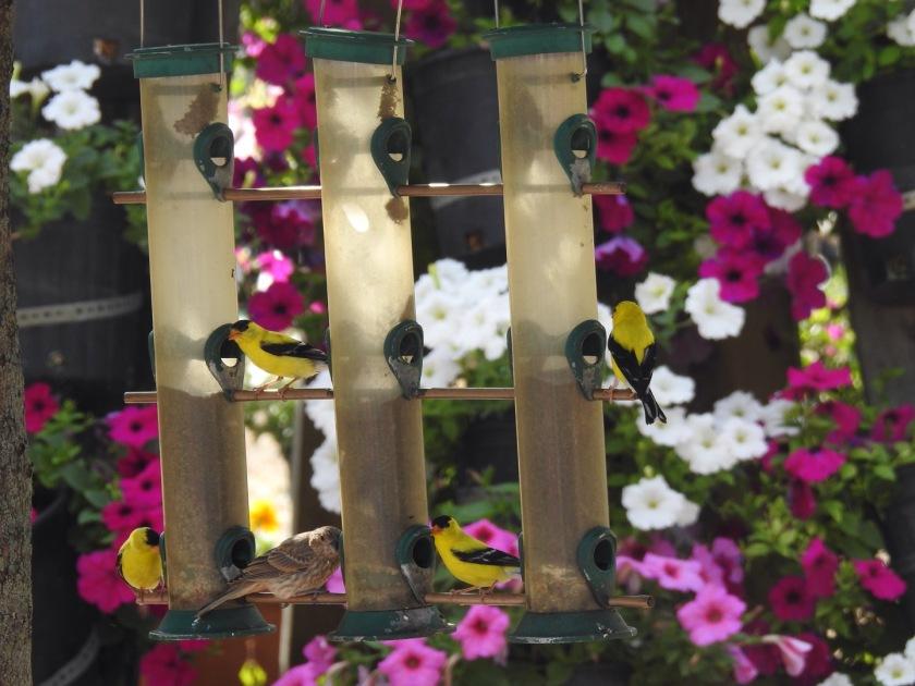 180816bbcut-fivebirds