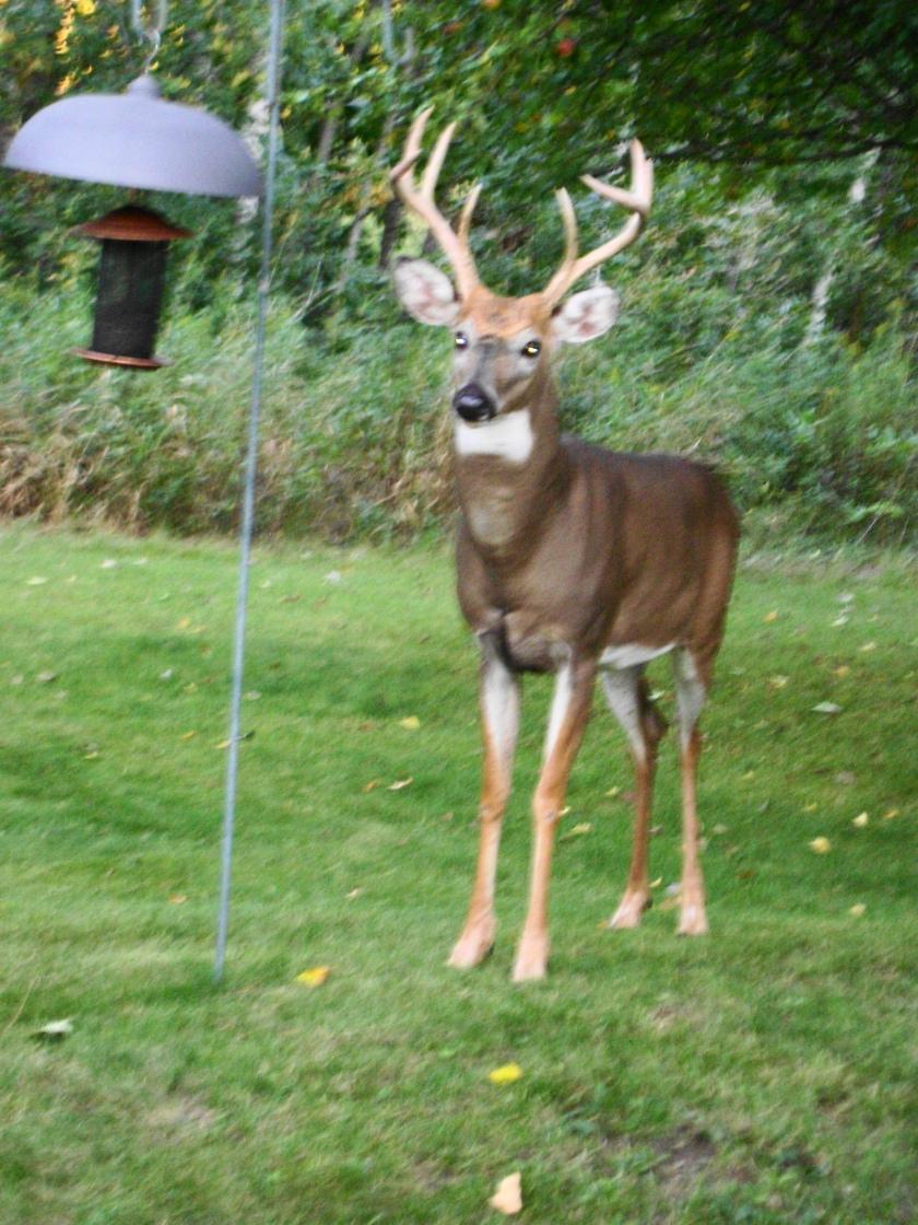 180911bbcut-buck