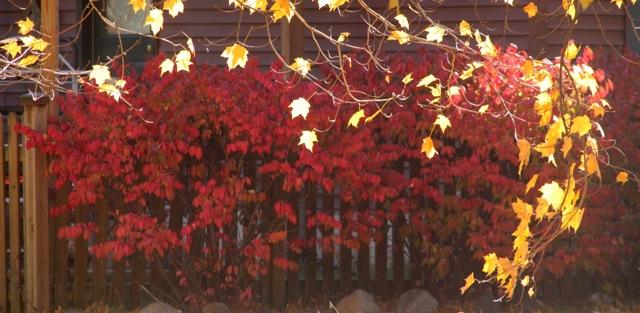 181031bbcut-autumn1