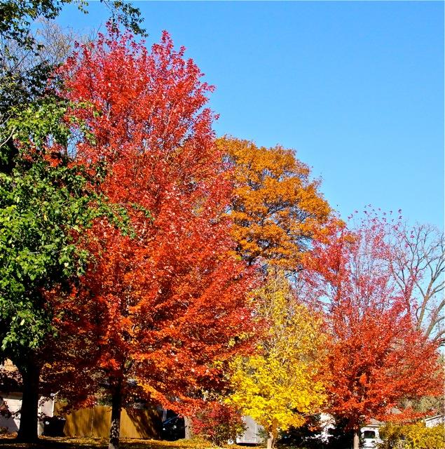 181031bbcut-autumn2