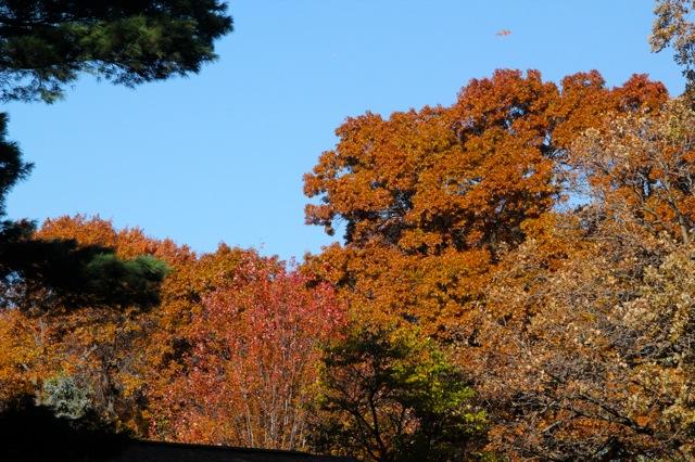 181031bbcut-autumn3