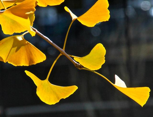 181031bbcut-autumn4