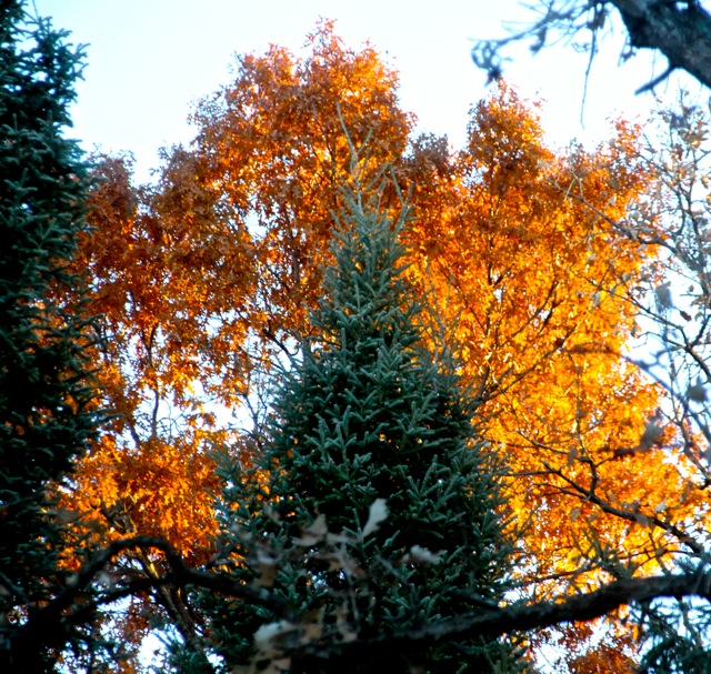 181031bbcut-autumn6