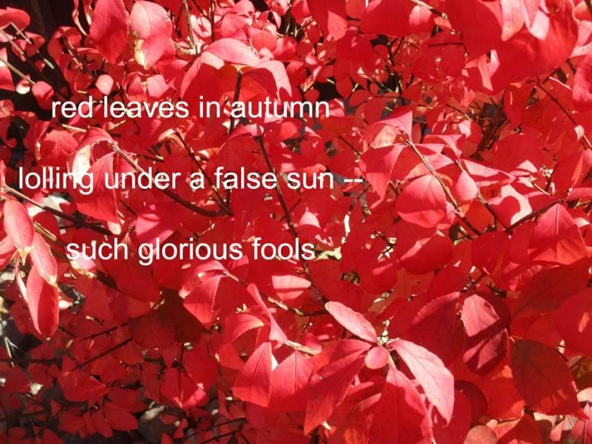 181031bbcut-haiku1