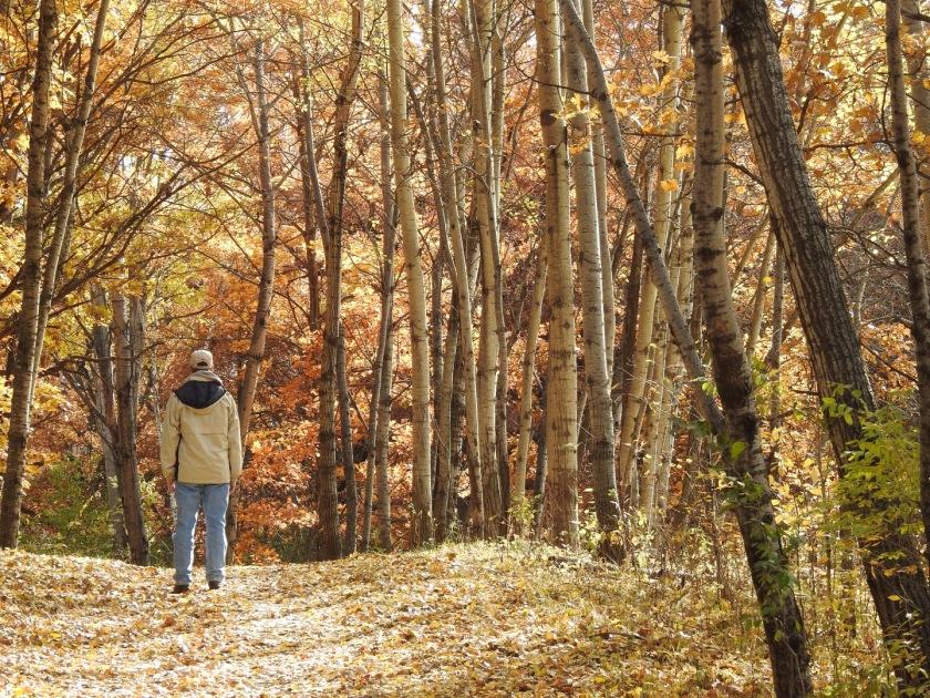 181031bbcut-naturewalk