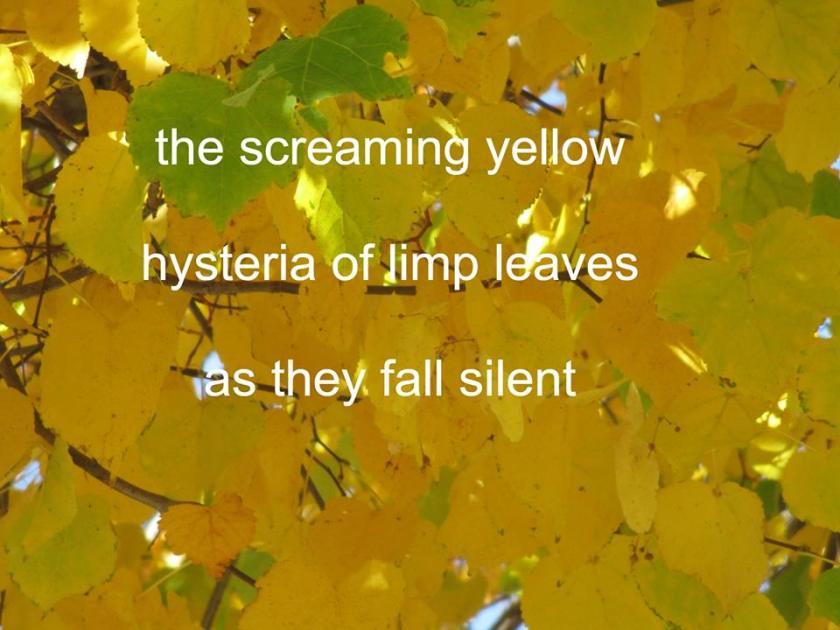 181106bbcut-haiku1