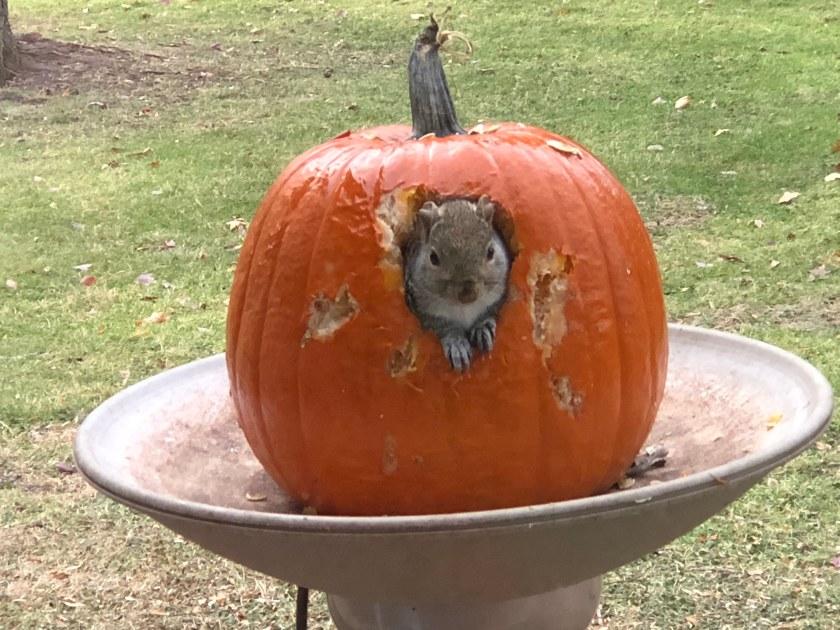 181130bbcut-squirrelpumpkin4