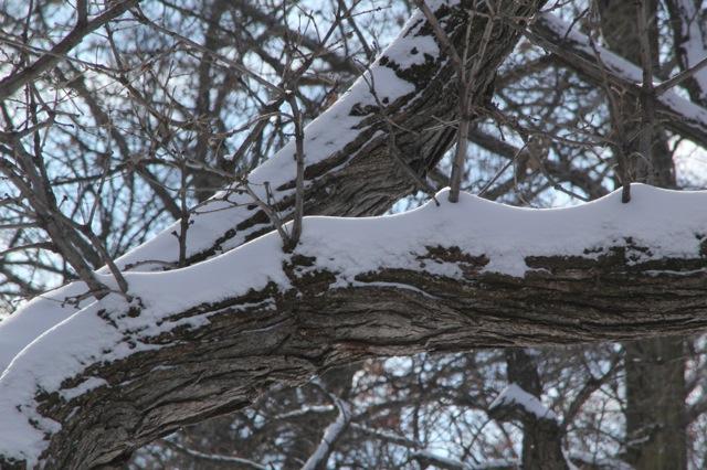 190130bbcut-snowblow4