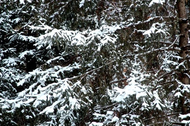 190130bbcut-snowblow5