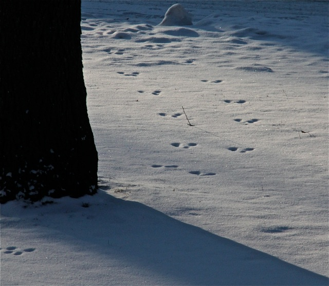190130bbcut-snowtracks3