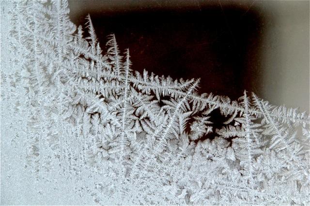 190212bbcut-frost4