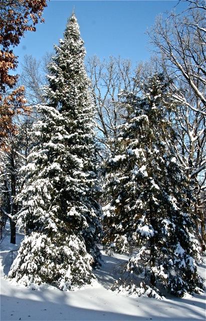 190212bbcut-snow4