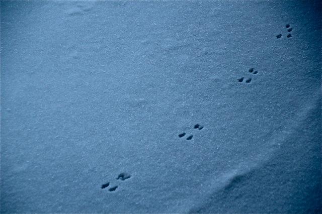 190212bbcut-snowpatterns4