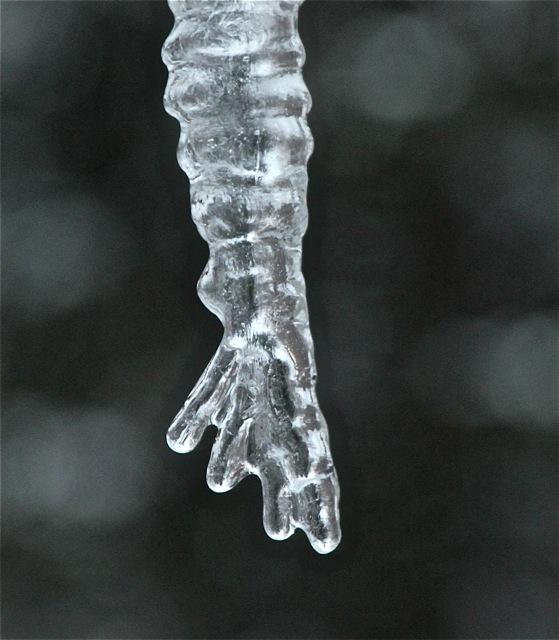 190226bbcut-icicles6