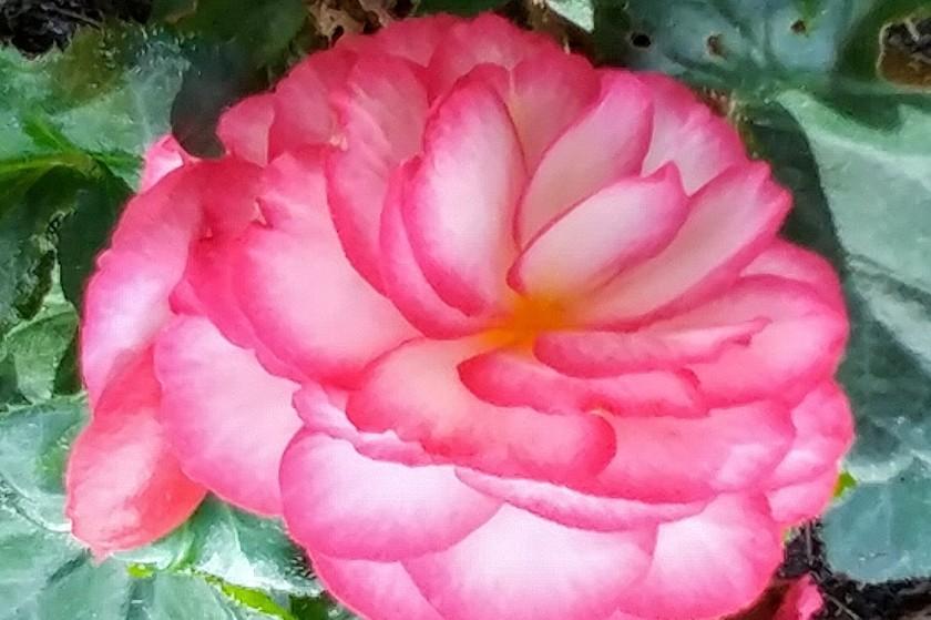 090416bbcut-flowers2
