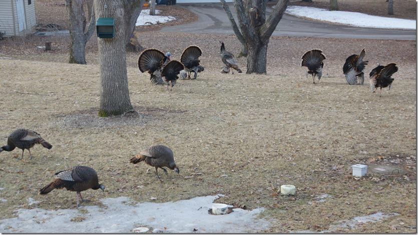 190402bbcut-turkeys5
