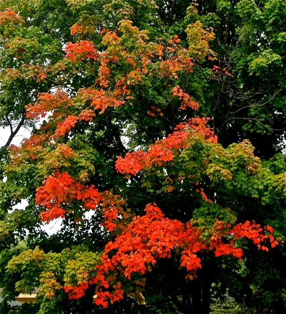 191001bbcut-autumn1