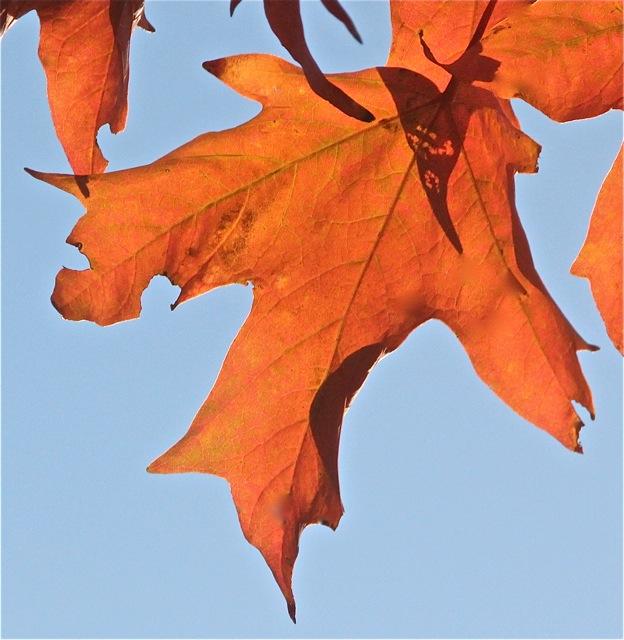 191001bbcut-autumn2