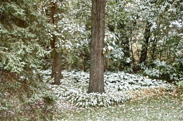 191015bbcut-white2
