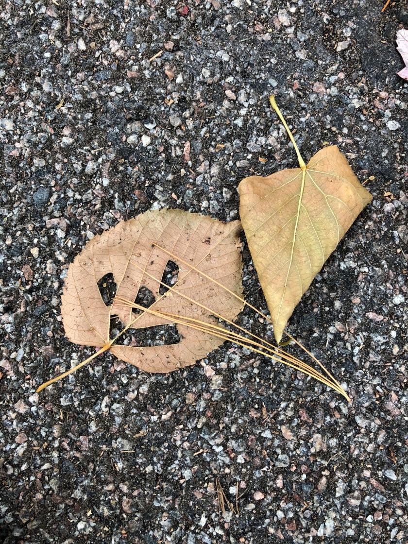 191105bbcut-leafpumpkin