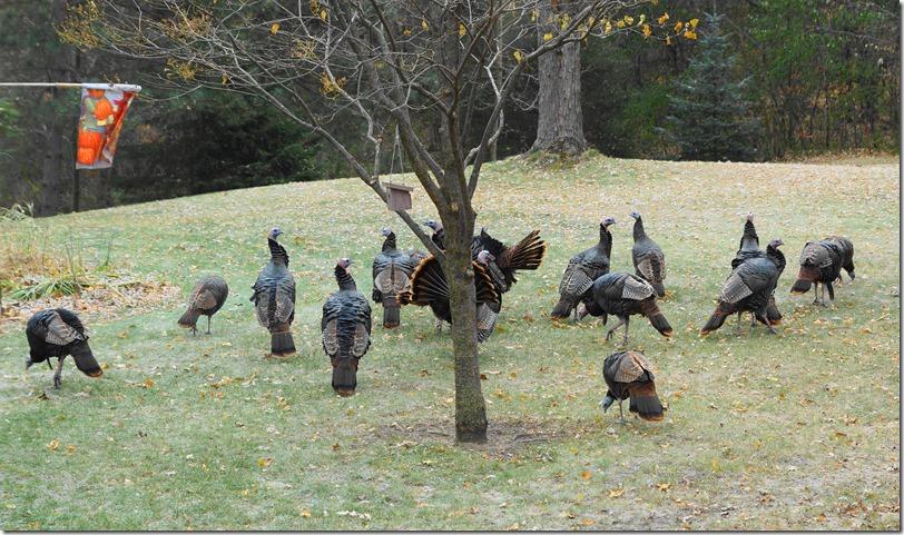 191111bbcut-turkeys4