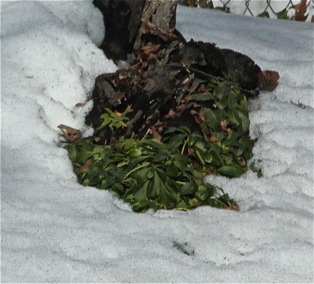 200309bbcut-snow1