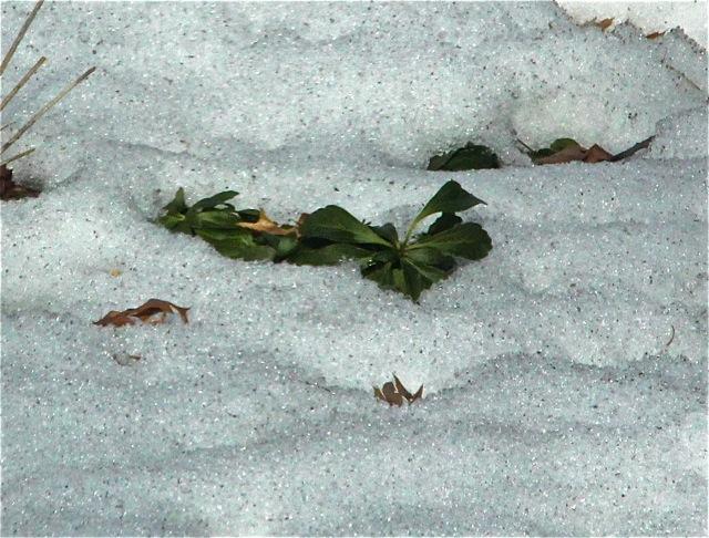 200309bbcut-snow2