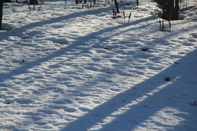 200309bbcut-snow4