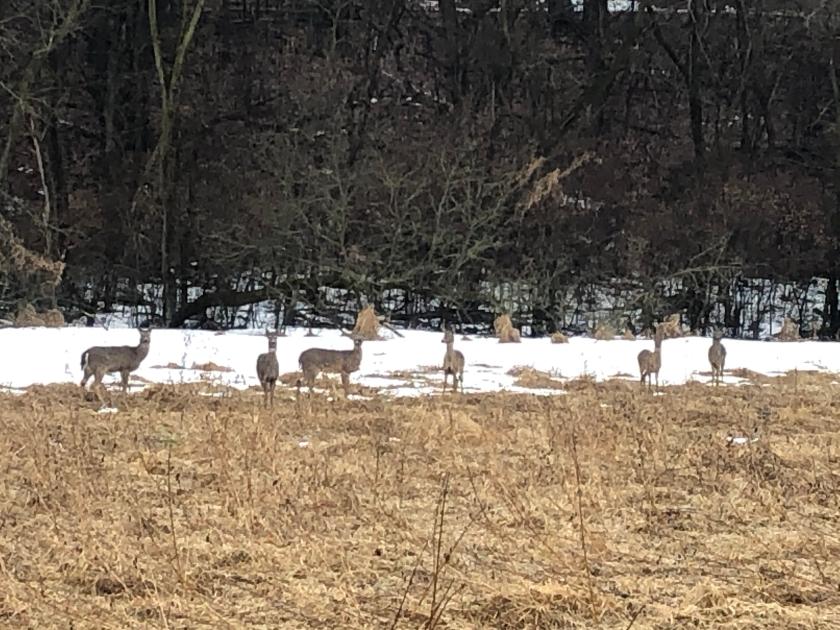 200323bbcut-deer