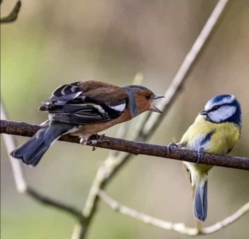 200428bbcut-lljkbirds