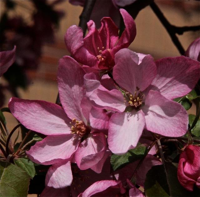 200512bbcut-blooming1