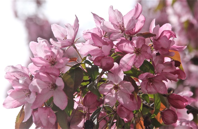200512bbcut-blooming10