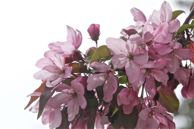 200512bbcut-blooming11