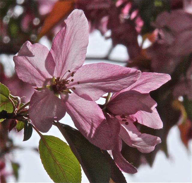 200512bbcut-blooming4