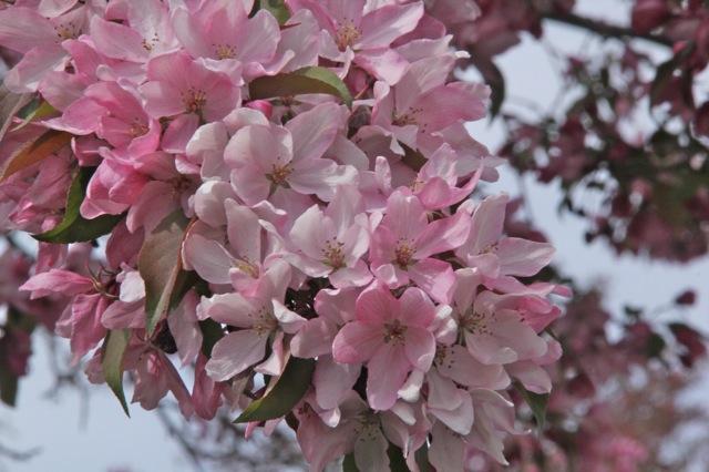 200512bbcut-blooming8