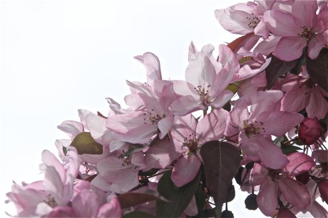 200512bbcut-blooming9