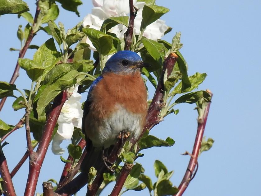 200516bbcut-bluebird