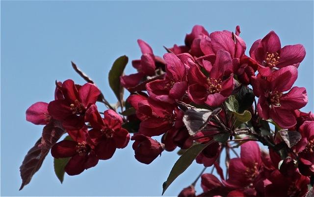 200520bbcut-blossom2