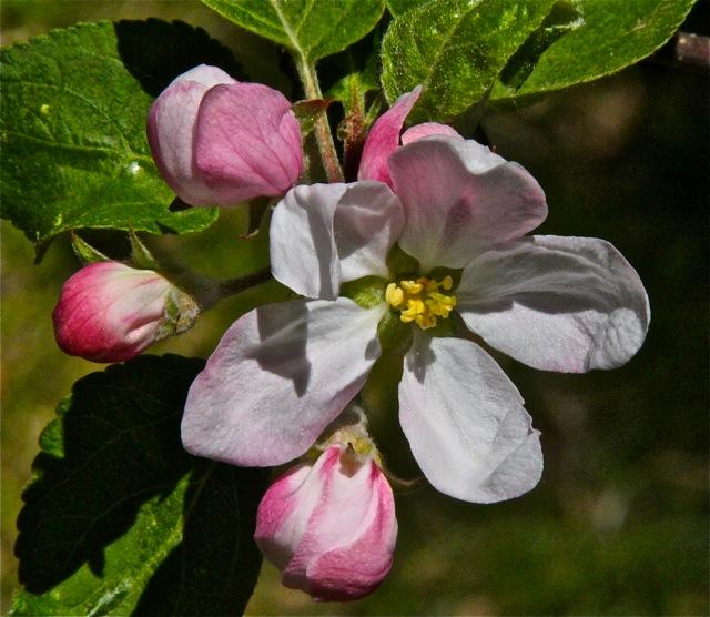 200520bbcut-blossom5