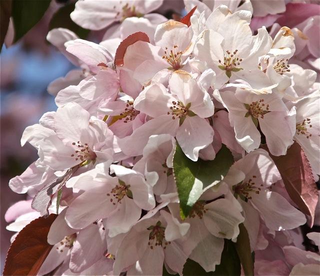 200520bbcut-blossom6