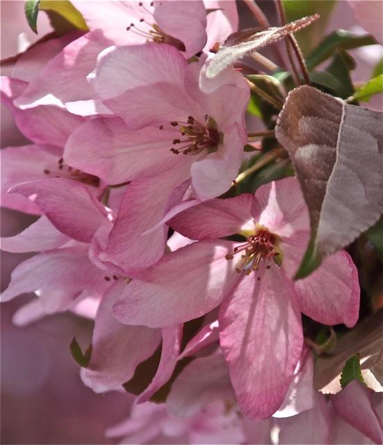 200520bbcut-blossom7