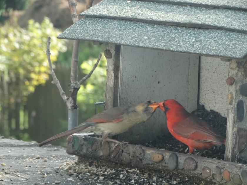 200520bbcut-cardinal1
