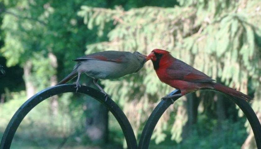 200520bbcut-cardinal2