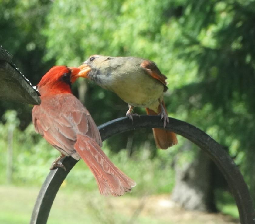 200520bbcut-cardinal3