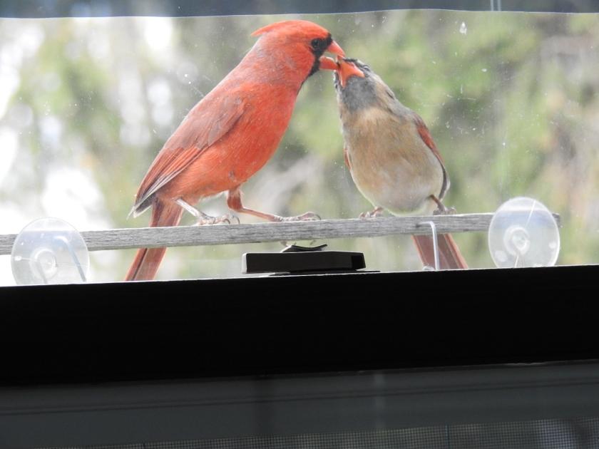200520bbcut-cardinal4