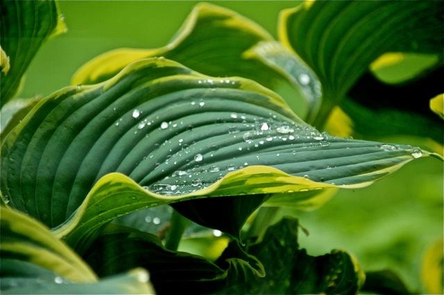200526bbcut-raindrops2