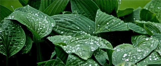 200526bbcut-raindrops3